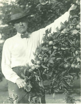 Ray Stannard Baker harvesting fruit