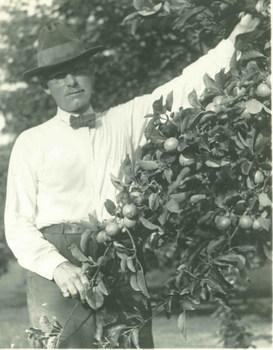 Ray Stannard Baker harvesting fruit
