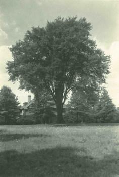 David Grayson's elm