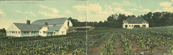 Barns and cattle shed at Massachusetts Agricultural College