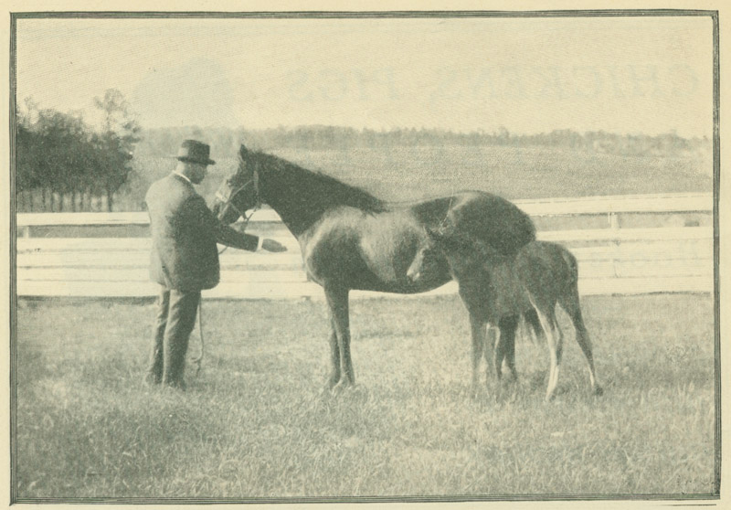 Booker T. Washington with horses