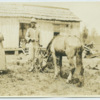 Black man and woman with  horse in a Tennessee yard
