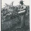 Hand sprays the grapevine