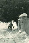 SnowWalkingEvergreens.jpg
